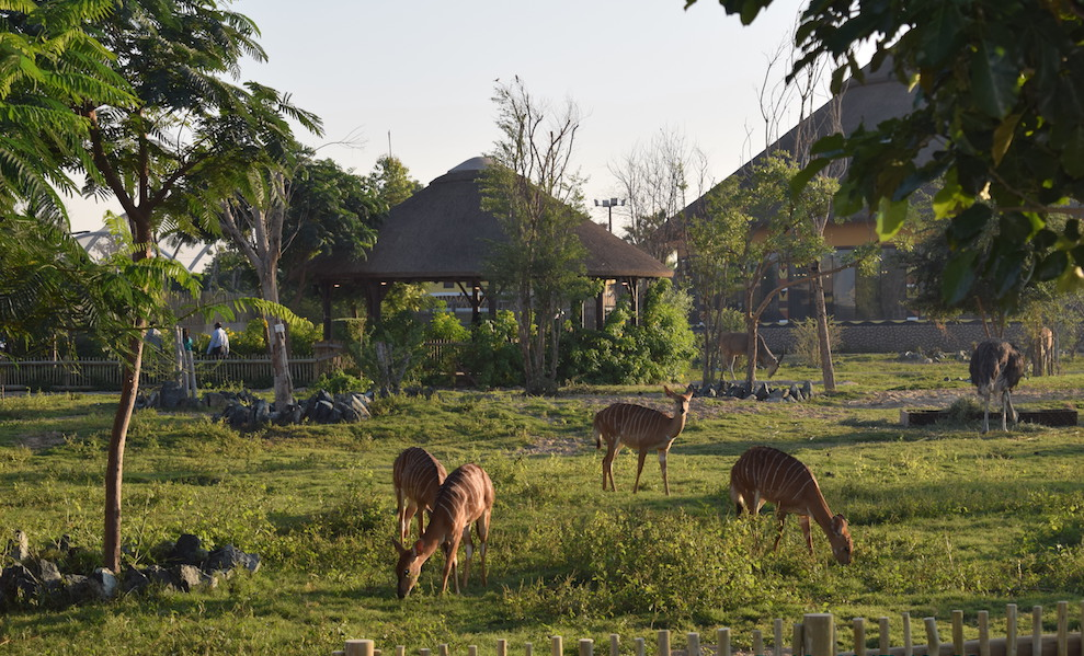 Dubai safari park animals, timing, entry fee