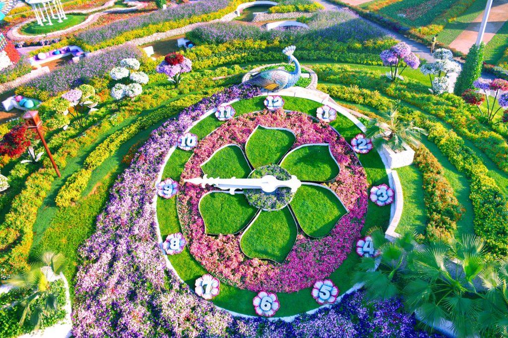 Dubai miracle garden, floral garden, butterfly garden dubai, uae